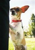 Pes na místní veřejný park