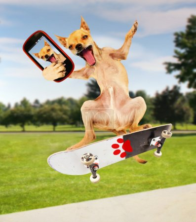Photo for A chihuahua taking a selfie while riding a skateboard - Royalty Free Image