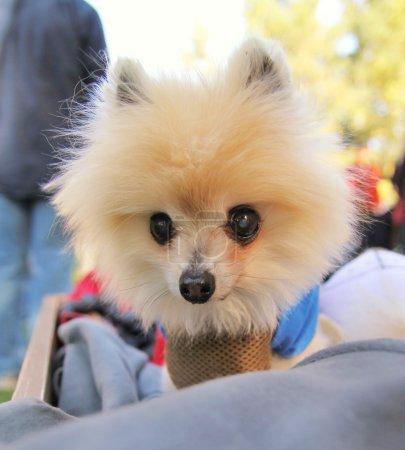 A cute dog at a local park...