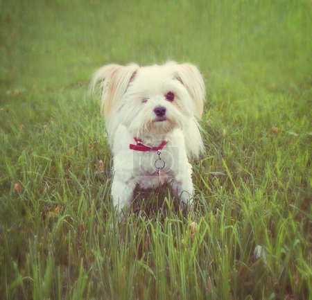 A cute dog on the grass at a local park during sum...