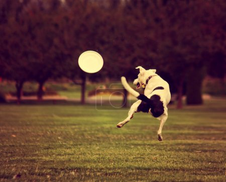 A cute dog playing with frisbee at park during sum...