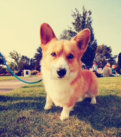 A cute dog in the grass at a park during summer...