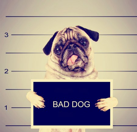 Photo for A dog in front of a convict poster getting a mug shot taken toned with a retro vintage instagram filter effect - Royalty Free Image