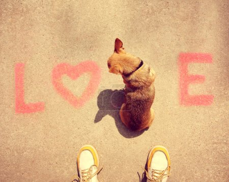 Chihuahua sitting in word love