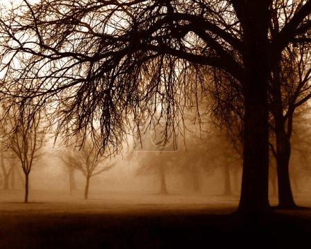 Arbres dans la Forêt brumeuse