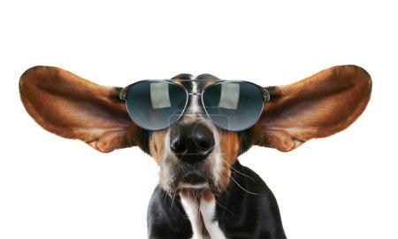 Basset hound with sunglasses