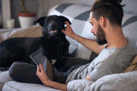Photo pour Propriétaire de chien caressant et grattant son animal de compagnie sur le canapé, tout en surfant sur Internet sur son appareil tablette, une relation affectueuse aimante - image libre de droit