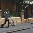 Постер, плакат: Pet owner walking his dog