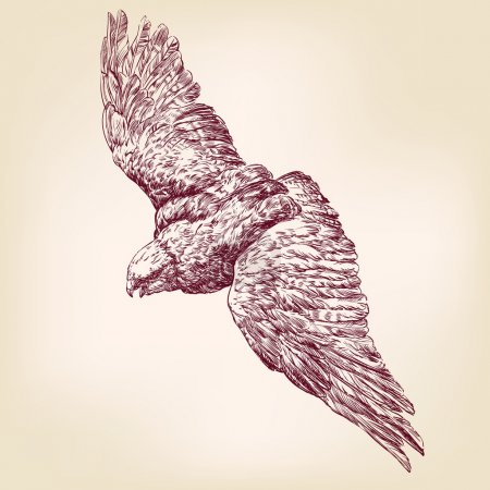 Eagle hand drawn vector llustration  sketch