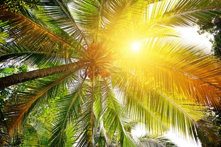 Photo for Sunlight through the leaves of palm trees - Royalty Free Image