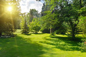 Sunrise in beautiful park