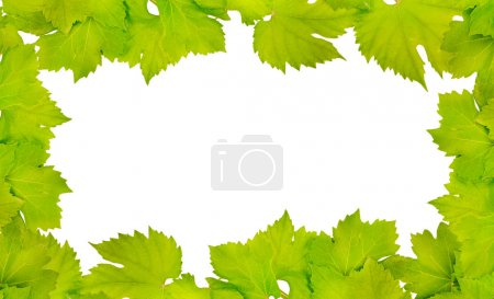 Photo for Border of fresh grape leaves isolated on white - Royalty Free Image