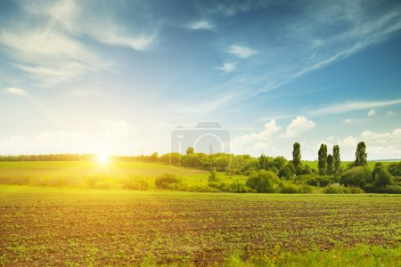 Photo for Beautiful sunset on green field - Royalty Free Image