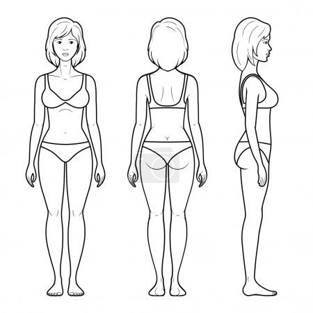 Illustration for Vector illustration of a female figure - front, rear and side view in underwear - Royalty Free Image
