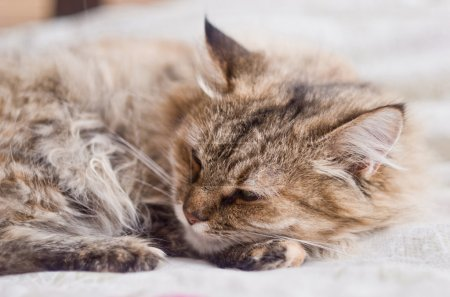 Cute little gray cat resting