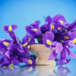 Постер, плакат: Beautiful bouquet of flowers irises