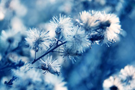 Photo for Natural macro floral background - Royalty Free Image