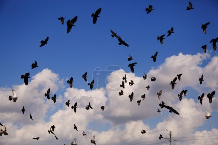 flying Pigeons over sky