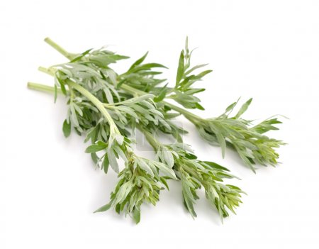 Artemisia, mugwort, wormwood, and sagebrush.