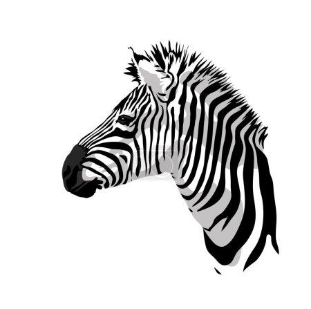 Illustration for Zebras portrait. Vector illustration. - Royalty Free Image