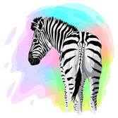 Zebra on abstract bright background