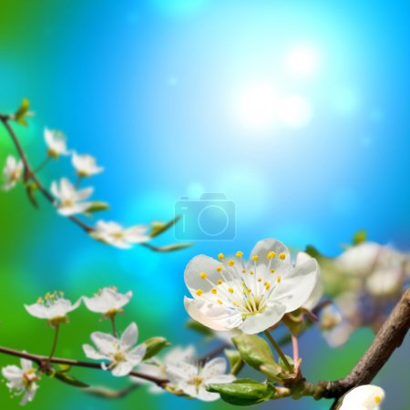 Photo for Spring blossom in the beautiful day - Royalty Free Image