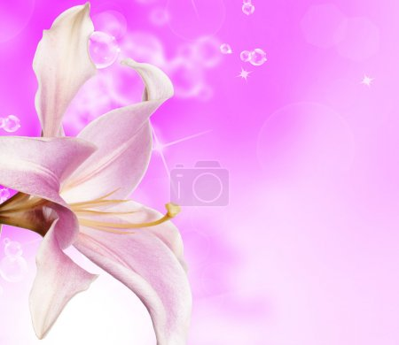 Rose flower on abstract background