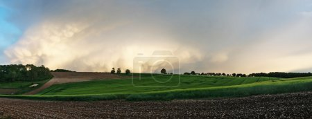 panoramic photo of the field