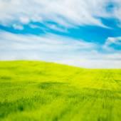 Tilt Shift Photo of Green Field at Spring