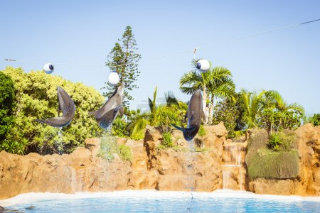 Show with dolphins in the pool, Loro parque, Tenerife