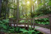 Temperate Rainforest in BC