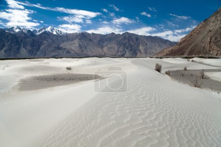 Dunes in Nubra Valley