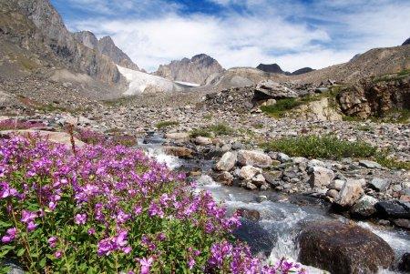 Karagem valley Altai mountains - Russia...