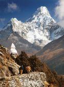 Blick auf Ama Dablam mit Stupa und Caravan von Yak
