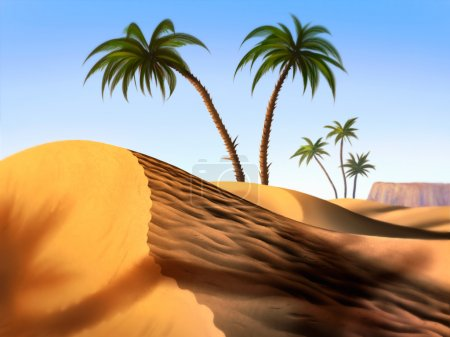 Sand dunes and palm trees