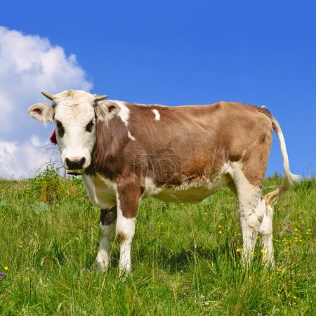 The calf on a summer pasture in a rural landscape