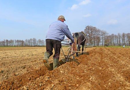 Photo pour Mise en jachère d'un champ de printemps par une charrue manuelle tirée par un cheval - image libre de droit