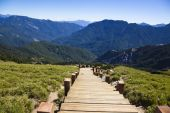 wood stairs in the hehuanshan forest Recreation area