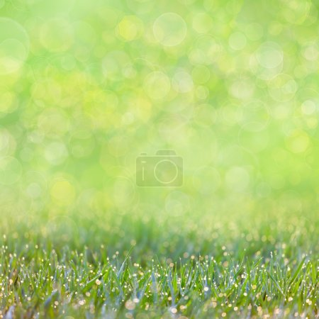 Green Grass with drops of dew -  defocused bokeh background