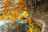 Autumn Landscape - Big Yellow Tree and lake in park