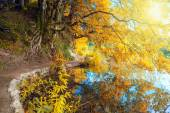 Sunny Autumn Landscape - old tree and lake