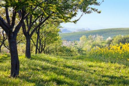 Photo pour Paysage de campagne le matin - Arbres en fleurs, herbe verte et magnifique panorama de vallée, printemps - image libre de droit