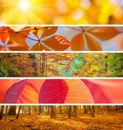 Photo for Set of Different Autumn Banners - colorful backgrounds, beautiful fall season - Royalty Free Image