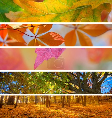 Collection of Autumn Banners -  fall season abstract  background