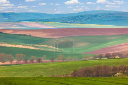 Photo for Spring Landscape of fields in countryside - different colors of hills - Royalty Free Image