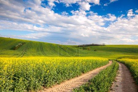 Photo pour Valle colorée - Champs à fleurs jaunes et route au sol surplombant le ciel blye, printemps - image libre de droit