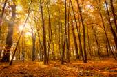 Morning in the Gold Autumn park with sunlight and sunbeams -  Be