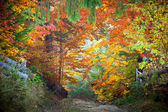 Amazing vibrant Autumn Fall Leaves colors in forest landscape an