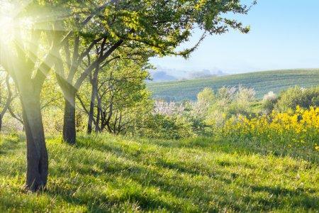 Foto de Paisaje de campo soleado en la mañana - árboles con flores, hierba verde y hermoso valle panorama, primavera - Imagen libre de derechos
