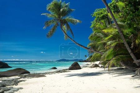 Beautiful sunny tropical beach on the island paradise